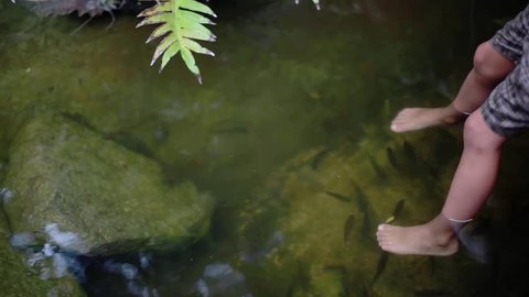 Close up of boy's feet have fish spa in natural pond among jungle. 1920x1080