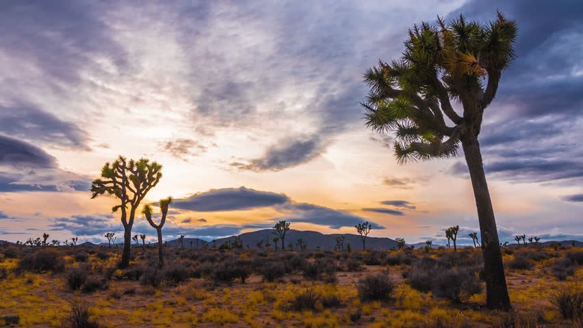 Time Lapse of Sunset at Joshua Tree National Park, Joshua Trees Silhouettes with Sun Setting, California Desert