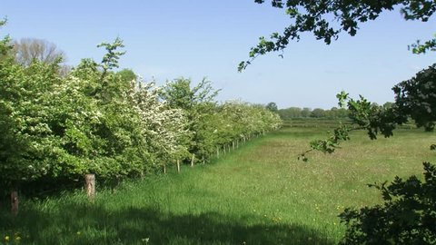 Dutch river forelands in spring, old agricultural landscape, characterised by small fields surrounded by hawthorn hedgerows + pan.  IJSSEL, THE NETHERLANDS