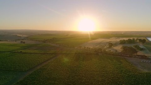 Aerial / Drone Around Beautiful Australian Wine Vineyard