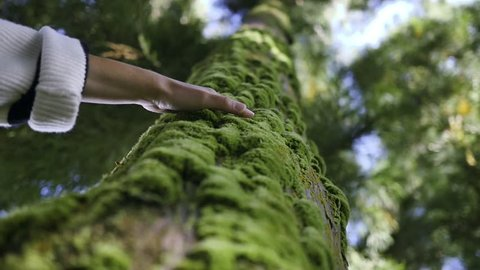 Girl palming a mossy tree