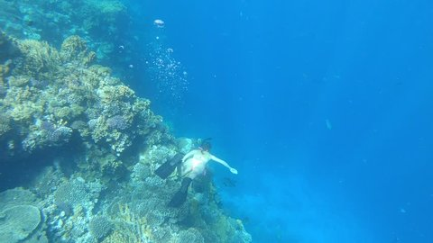 Tourist Snorkeling Turquoise Water and Beautiful coral reef Red Sea Egypt