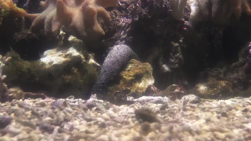 Soft corals on sea bottom. Underwater fullHD 50 fps footage