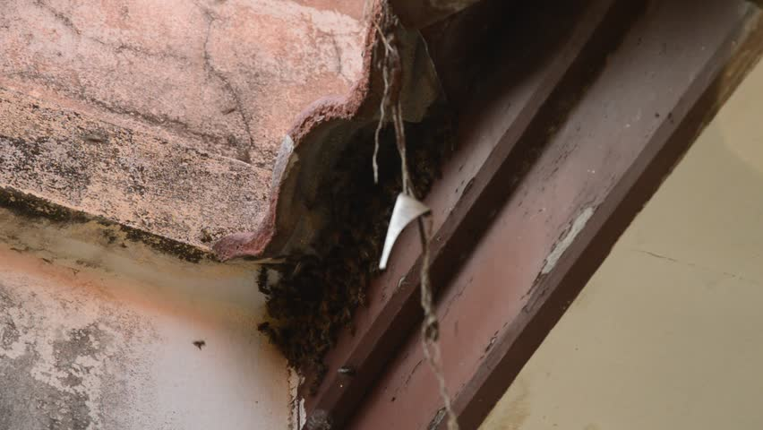 Bees Making Nest Under Tile Roof Hole In Home Stock Fooe