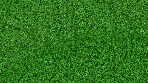 Summer green grass top view tiled texture animated beautiful nature plant blowing by the wind. Football grass.
