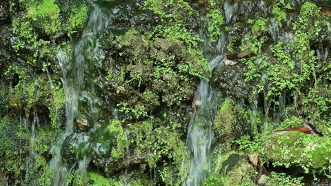 Motion of waterfall falls and splash on rocks covered with green moss for nature background.