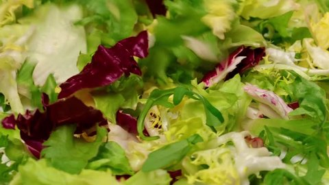 Macro video of mix of different fresh green salad leaves falling down on plate. Leaves of red and white radicchio, arugula, curled-leaved endive and frisee rotating isolated.
