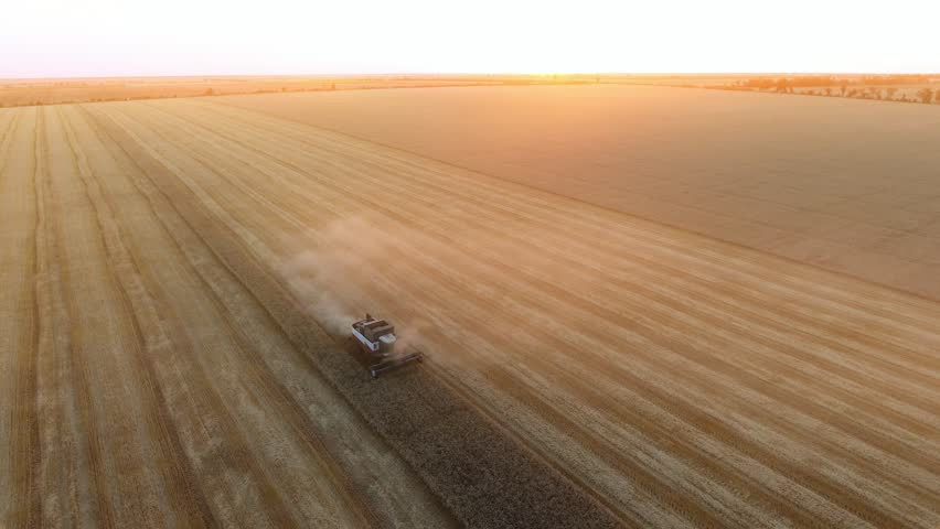Nikolaev, Ukraine - June 28, 2017:A bird`s eye view of a combine harvester threshing wheat on a striped field at sunset in summer. The skyscape is sparkling yellow #1007767564