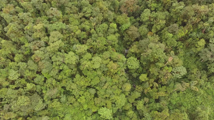 Flying above the canopy of montane rainforest. A stream is visible through the trees. On the Amazonian slopes of the Andes in Morona Santiago province, Ecuador