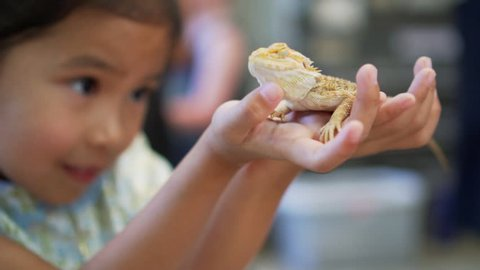 Cute asian child holding and playing with chameleon. She is not scared to hold it on hand. Concept of self learning and love animal lifestyle.