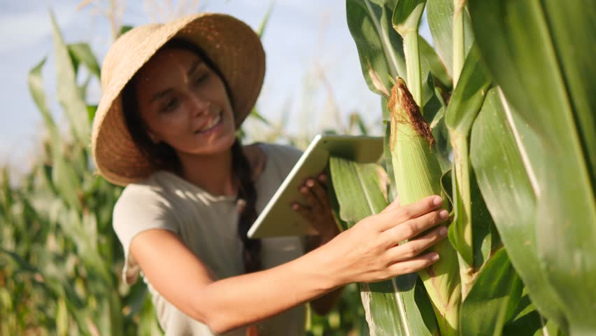 Young Mixed Race Farmer Woman Checking Corn Quality and Using Mobile Tablet Gadget at Organic Farm Field. 4K, Slowmotion. Future Technology Agricultural Food Harvest Footage Concept.