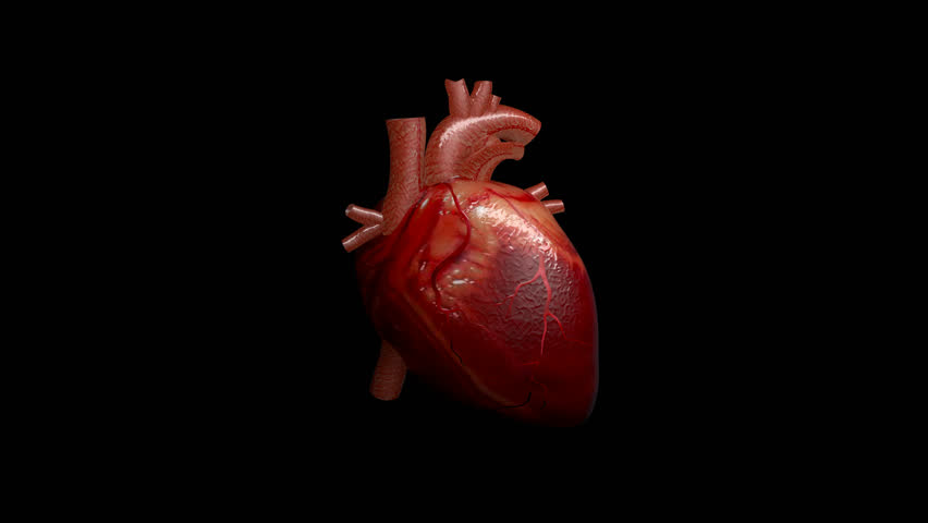 3D animation of a beating human heart with alpha channel | Shutterstock HD Video #1008440224
