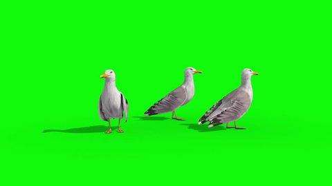 Three Seagulls Green Screen 3D Renderings Animations
