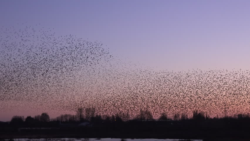 Stock Video Clip Of Starling Flying From Tree Bird On A Shutterstock