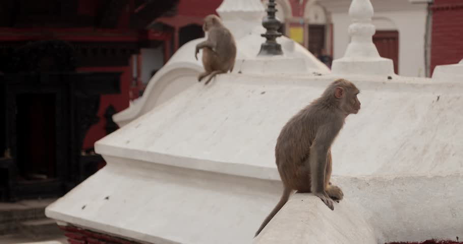 Tibet Nepal Kathmandu Pashupatinath Temple
