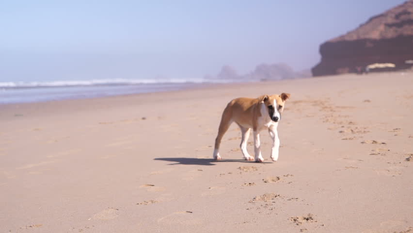 puppy walking on the sand on the beach