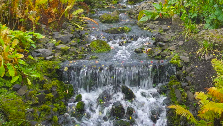 Beautiful Waterfall in Royal Botanic Garden in Edinburgh, Scotland