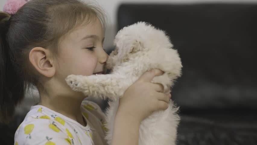 Portrait of happy young girl who takes adorable bichon puppy and holds cute baby dog in front of her smile face, beautiful child and sweet little dog gently caressing your nose to pet muzzle, close up