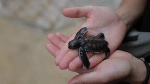 little turtle on the palm of a girl.
