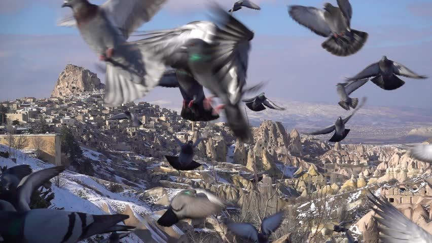 Bird flapping in cappadocia background shooting with slow motion | Shutterstock HD Video #1009097234
