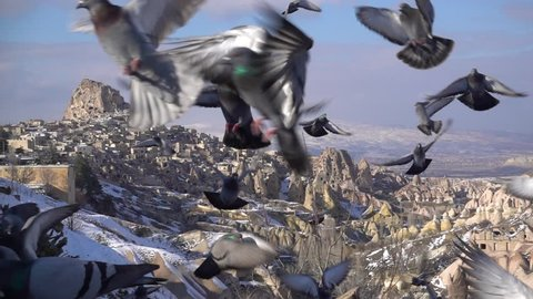 bird flapping in cappadocia background shooting with slow motion