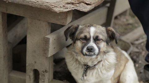 ugly dog sitting near his master