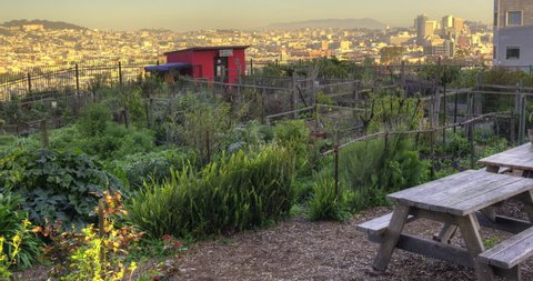 Community Garden. Perched on top of a hill in San Francisco's Potrero district, this is a community garden with a panoramic urban view.