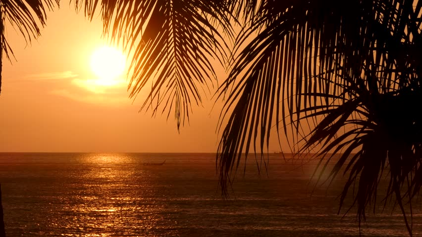 Beach coconut trees in the sunset time.