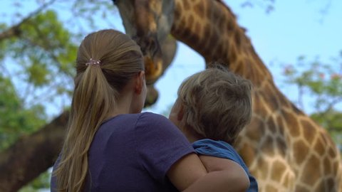 Woman and her son feed a giraffe in a safari park