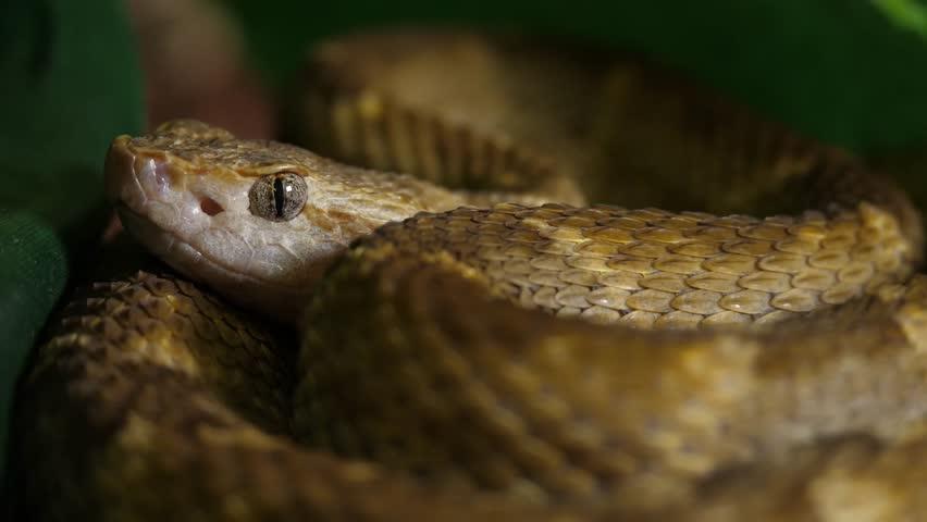 Header of viper