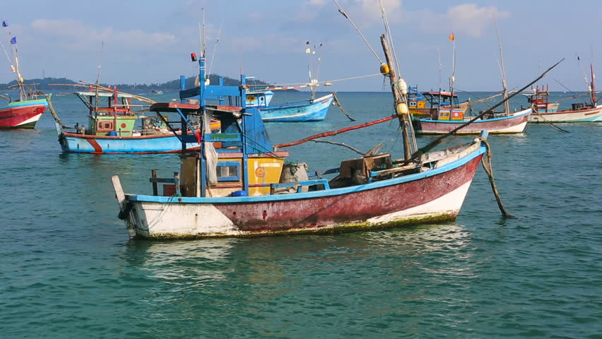 Fishing Boats in Sri Lanka. Sri Lankan Fishing. Sea view from the Port. Seafood is very popular there. People sold it to the local restaurants. There are many Fish, shrimp, squid and octopus near the