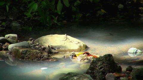 Manuel Antonio Park: Newt Crawling On Boulder