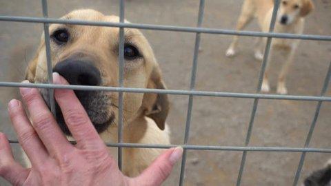 4K Dog smells a hand of stranger through metal fencing