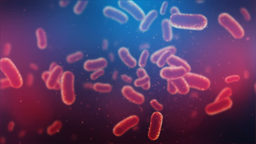 3d animation of flying over group of bacterias. Medical video background | Shutterstock HD Video #1009542854