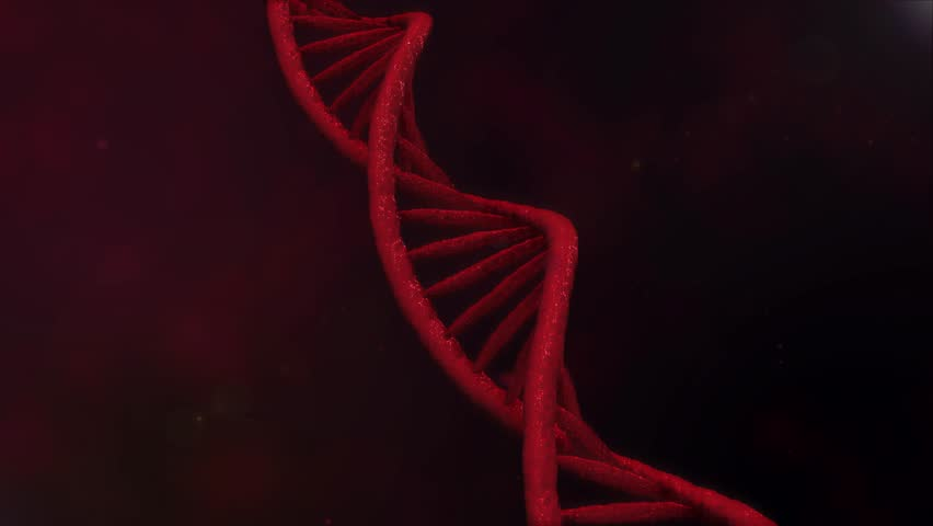 Digital red DNA. Rotating DNA strands are assembled from individual elements. Genetic engineering scientific concept. The science footage. 4K   Shutterstock HD Video #1009564454