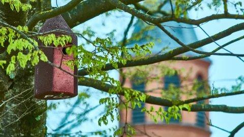 Birdhouse hangs on tree in city park.