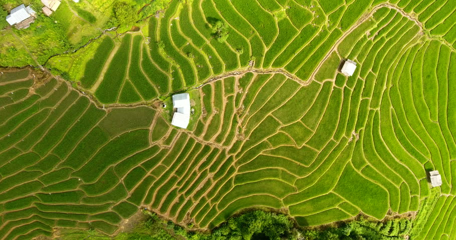 Asian rice field terrace on mountain side, lush agriculture land. Rice is the staple food of Asia and part of Pacific. Over 90 percent of the world's rice is produced and consumed in the Asia-Pacific.