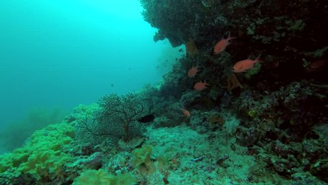 Life under cornice coral reef