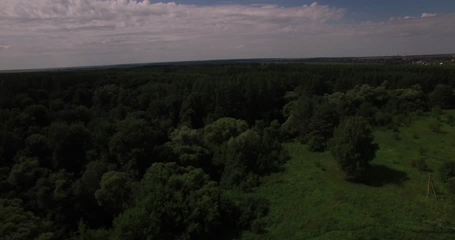 Aerial view of a thick forest in summer | Shutterstock HD Video #1009938254