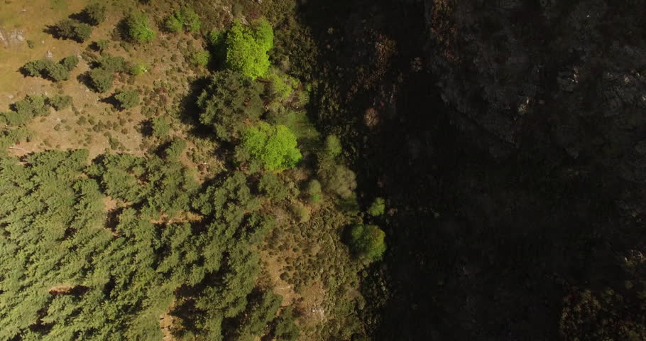 Flying over Tejera Negra Beech forest in Spain