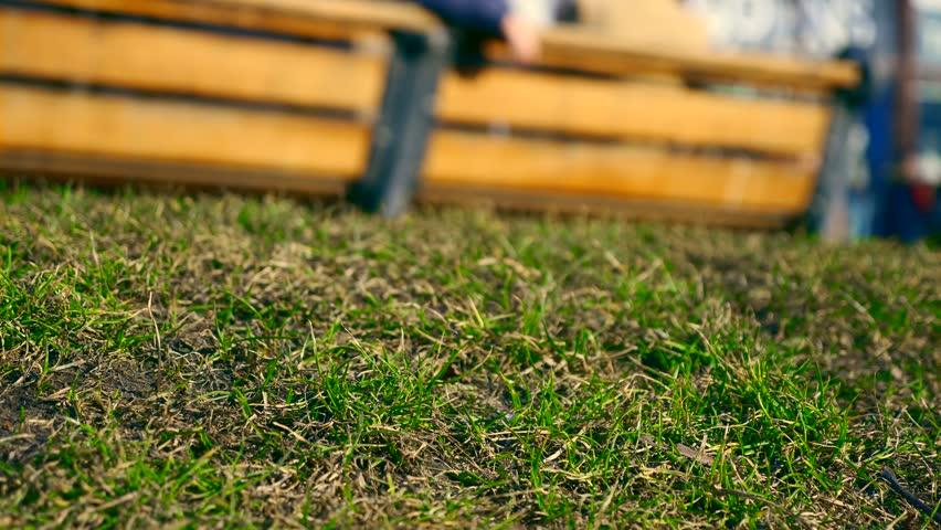 Word SALE On Shop Window. Spring New Green Grass On Urban Green Space. People Walking Crowd On City Street   Shutterstock HD Video #1010116184