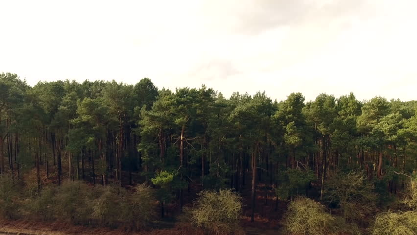 Drone Aerial footage of British woodland forest, pine trees and woods pan