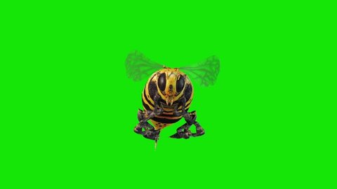 Bee Wasp Flies Loop Front Green Screen 3D Renderings Animations