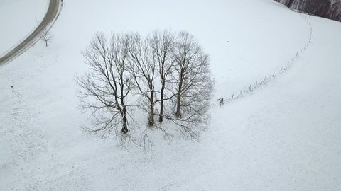 AERIAL WS POV Bare tree in winter / Neustift, Upper Austria, Austria
