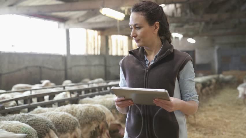 Sheep stockbreeder in barn using digital tablet | Shutterstock HD Video #1010323244