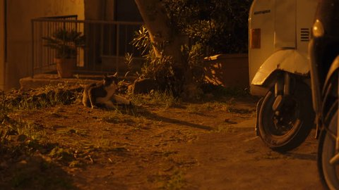 A cat by a motorcycle at night