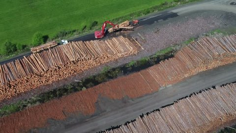 Lumber mill operations with logs being processed and sorted