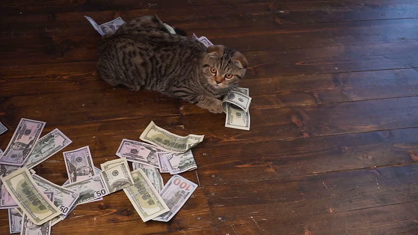 Unexpected wealth. A lot of money falls on the cat | Shutterstock HD Video #1010384714