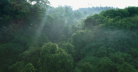 Aerial view of foggy rainforest. Flight over of jungle