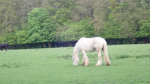 Grey horse in field, Chorleywood, Hertfordshire